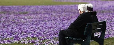 An elderly couple sit on a bench next crocus flowers in a park in Duesseldorf. (Reuters)