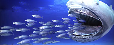 Model of megamouth shark.