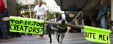 """Mugsy,"" a Boston Terrier, carries a sign that reads ""Top 1%, Job Creators? Bite Me!"" during an Occupy Seattle protest, Saturday, Oct. 15, 2011, in downtown Seattle. Mugsy was there with owner Frankie Petitclerc, of Whidbey Island, Wash. (AP Photo/Ted S. Warren)"
