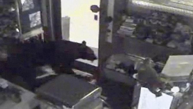 This image provided by Rocky Mountain Chocolate Factory taken from surveillance video shows a bear leaving the Rocky Mountain Chocolate Factory store in Estes Park, Colo., on July 25, 2012.  The black bear went in and out of the candy store multiple times. He used the front door and didn't break a thing. He did, however, steal some treats. (AP Photo/Rocky Mountain Chocolate Factory)