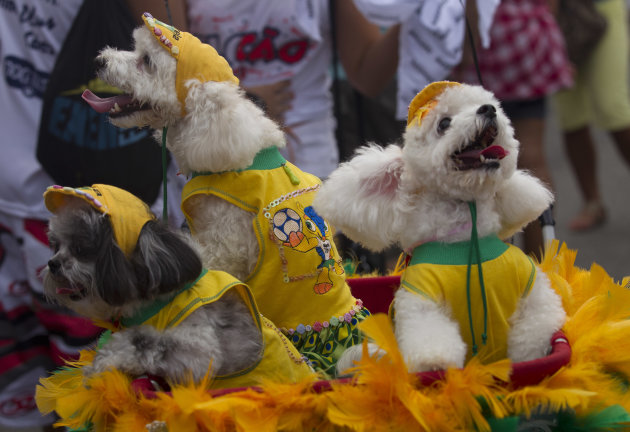 Dogs wear Brazil's national soccer team jerseys during the &quot;Blocao&quot; dog carnival parade in Rio de Janeiro, Brazil, Sunday, Feb. 3, 2013. According to Rio's tourism office, Rio's street Carnival this y