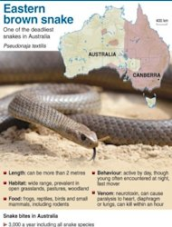Graphic on the eastern brown snake, one of Australia&#39;s deadliest snakes
