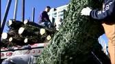 Tree sales begin on Christmas Tree Lane