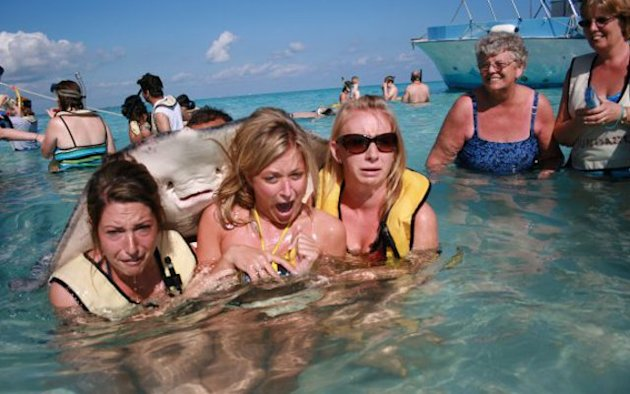 It&#39;s behind you: The now infamous stingray photobomb
