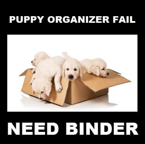 This is no way to file your puppies
