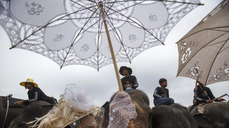 A woman holds a parasol as she stands next to elephants during a match at the 2014 King's Cup Elephant Polo Tournament in Samut Prakan province