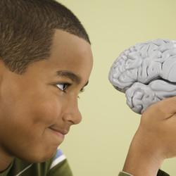 Smaller Bank Accounts, Smaller Brains: The Ravages of Inequality on America's Children