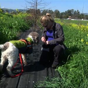 Truffle-Hunting Dogs Sniff Out Prized Fungus
