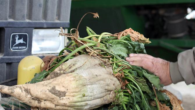 Calif. farmers team up to convert beets to ethanol