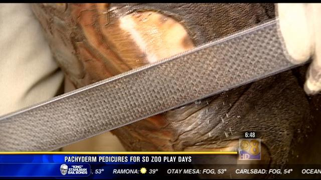 Pachyderm pedicures for San Diego Zoo play days