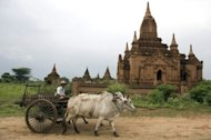 Farmer driving his cart pulled by oxen in Bagan, Myanmar