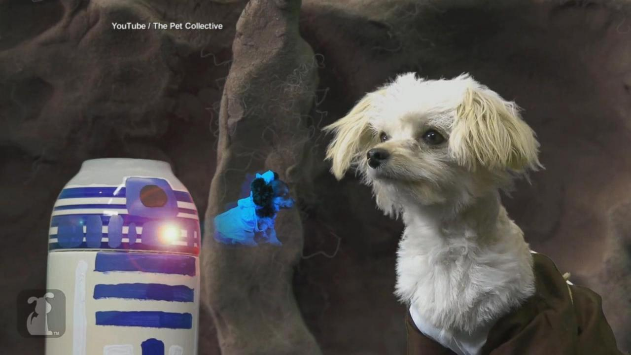 May the Woof Be With These Pets in 'Paw Warz' Parody Video