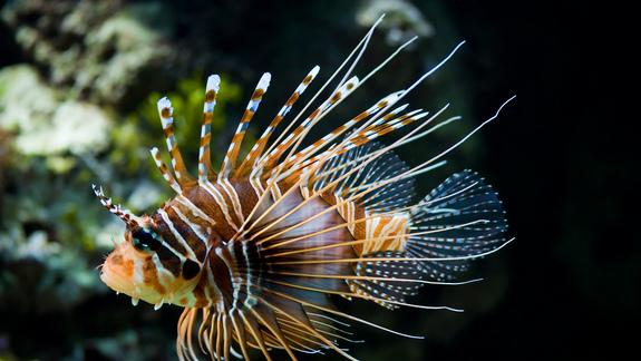 Ocean Invaders: Ports Most Vulnerable to Invasive Species