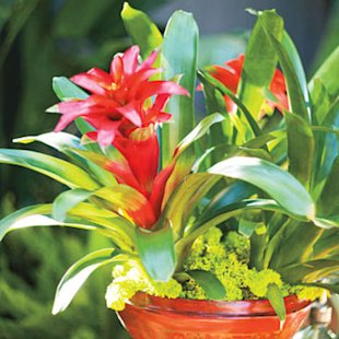 Bring in some bromeliads