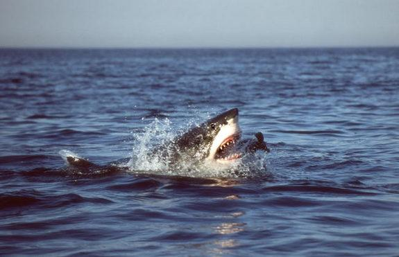 Weird Facts You Didn't Know About Sharks