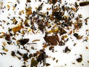 Sequencing DNA from 'Insect Soup' May Aid Conservation