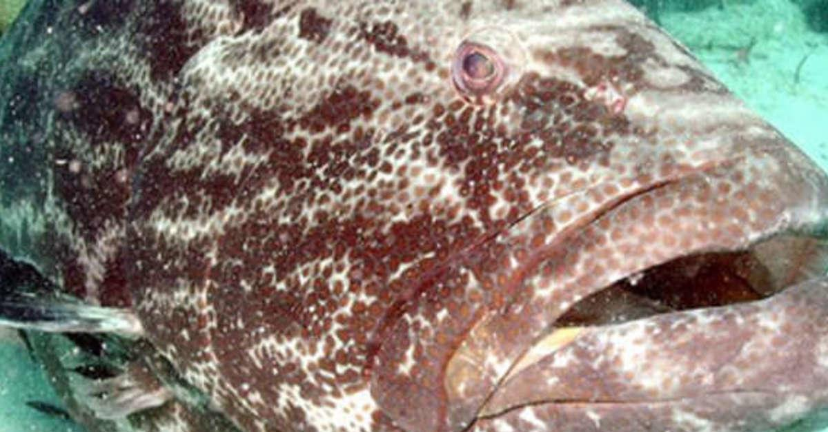 7 Fish That You Should Probably Stop Eating