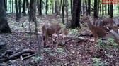 2012 has new changes for deer hunters