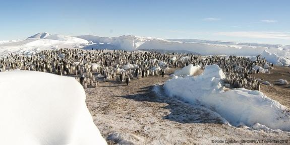 2 New Emperor Penguin Colonies Spied in Antarctica