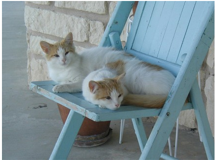 Pair of Cats on a Chair