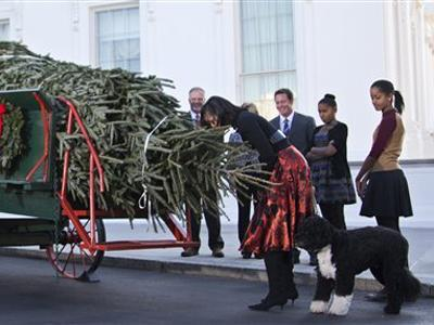 Raw: White House Christmas Tree arrives