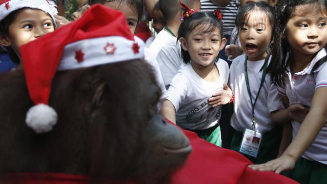 Schoolchildren touch an orangutan dressed in a Santa Claus outfit during the Animal Christmas party at Malabon Zoo in Manila