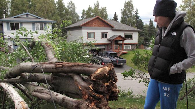 Diana Patton stands near two trees that fell over in her front yard during a wind storm in Anchorage, Alaska, Wednesday, Sept. 5, 2012. The storm knocked out power in parts of the city, uprooted trees and closed schools. (AP Photo/Rachel D'Oro)
