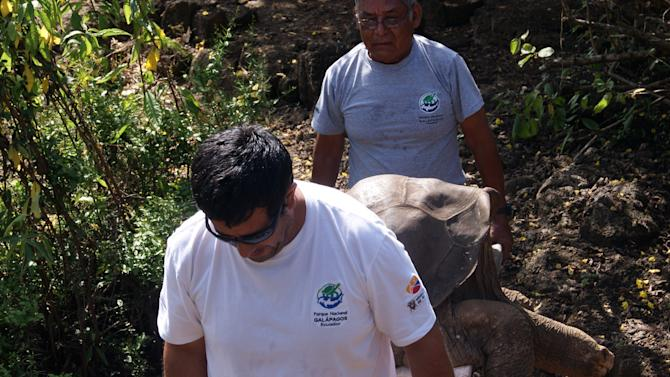 In this photo released by the Galapagos National Park Direction, DPNG, the body of the famed Galapagos giant tortoise Lonesome George is removed on stretcher from a corral at the Galapagos Islands, Ecuador, Sunday, June 24, 2012. The Galapagos National Park says in a statement that the tortoise estimated to be about 100 years old died Sunday. Various mates had been provided for Lonesome George over the years in unsuccessful attempts to keep his subspecies alive. (AP Photo/Galapagos National Park Direction)