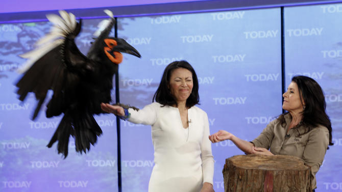 "This April 12, 2012 photo released by NBC shows co-host Ann Curry holding a bird and animal expert Julie Scardina on the ""Today"" show in New York.  Curry, who joined the show as a news anchor in 1997, offered a tearful goodbye as co-host of NBC's ""Today"" show on Thursday, June 28, 2012. She will remain at NBC News to be anchor-at-large and national and international correspondent. (AP Photo/NBC, Peter Kramer)"