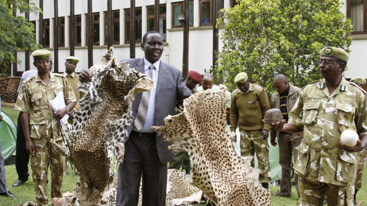 Kenya Wildlife Service director William Kibet Kiprono displays siezed  leopard and cheetah skins in Nairobi, Kenya, Wednesday, Jan. 16, 2013.  (AP Photo/Khalil Senosi)