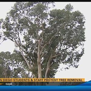 UC San Diego students and staff protest tree removal