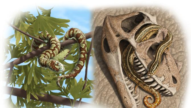 An artist rendering from oldest-known snake fossils