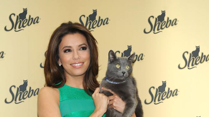 IMAGE DISTRIBUTED FOR SHEBA - Eva Longoria kicks-off the SHEBA. Feed your passion. Contest, in which cat lovers can enter for the chance to have the SHEBA brand help feed one of their passions in a big way, Thursday, March 7, 2013, in New York.  Visit Sheba.com/FeedYourPassion to enter and to learn more about SHEBA Entrees for Cats.  (Photo by Diane Bondareff/Invision for SHEBA/AP Images)