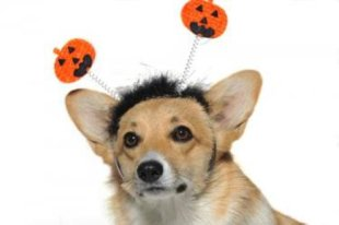 Halloween can be a dangerous time for your pet! 