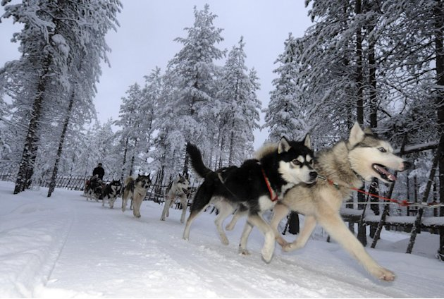 The slaughter of more than 50 sled dogs, allegedly with a shotgun and a knife, sparked protests from around the world