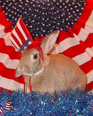 Red, white, and bunny