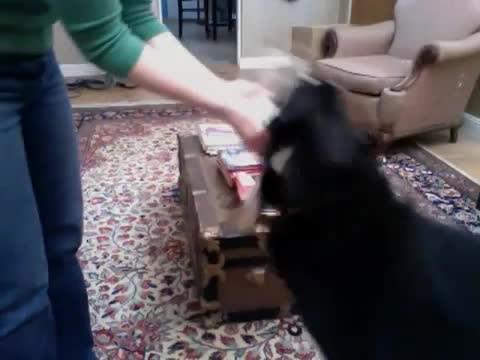 Dog Loves Perfume Sample