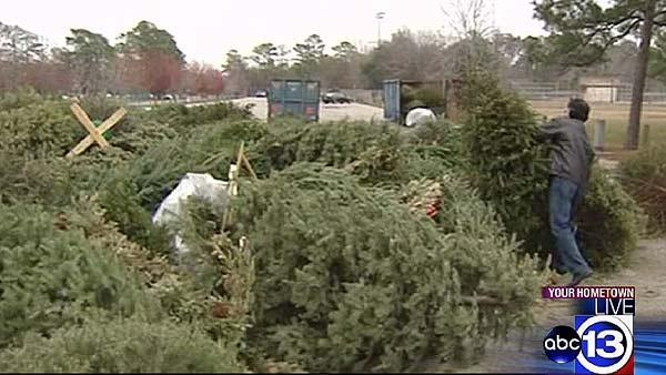 Houstonians recycle Christmas trees