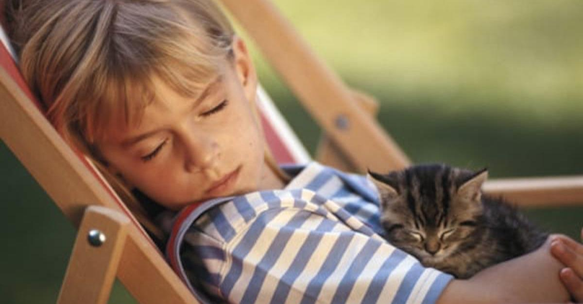 12 Signs That Your Cat Loves You