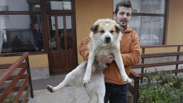 Bosnian animal activist Aldin Pasic carries a stray dog in the Sarajevo suburb of Dobrnja, Bosnia, Tuesday, Nov. 27, 2012. Bosnia passed a law nearly four years ago banning the killing of strays, alarmed at a sharp rise in canine slaughter as wild dogs proliferated on Bosnian streets. But people ignored the law, largely because authorities failed to provide alternatives such as sterilization. Sarajevo has become the only city in Bosnia where the law is respected _ thanks to a new city-funded dog shelter run by animal protection activist Amela Turalic that performs sterilizations. (AP Photo/Amel Emric)