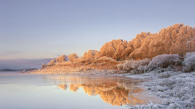 Loch Achanalt, Strathbran, Scotland: Ian Cameron's picture, for which he won the Epson 'Exceed Your Vision' award and was commended in the Classic View category, shows light at sunrise turning the frosted trees at the edge of the loch 'powdered ginger'. (Ian Cameron,  Landscape Photographer of the Year)