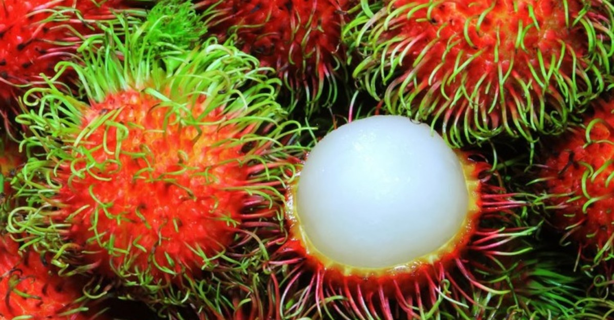 18 Craziest Tropical Fruits From Asia