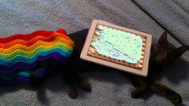 RIP Marty -- the Inspiration for Nyan Cat