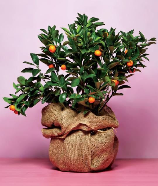 What Do Chefs Want for Mother's Day? Citrus Trees and Caviar.