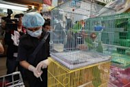 A government inspector taking a swab from a bird cage at a bird market in Hong Kong in 2010. Hong Kong on Thursday closed a popular tourist spot where hundreds of caged birds are on display after the deadly H5N1 avian flu virus was detected at one of the stalls