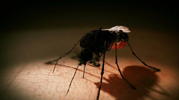 Mosquito Transferred Virus