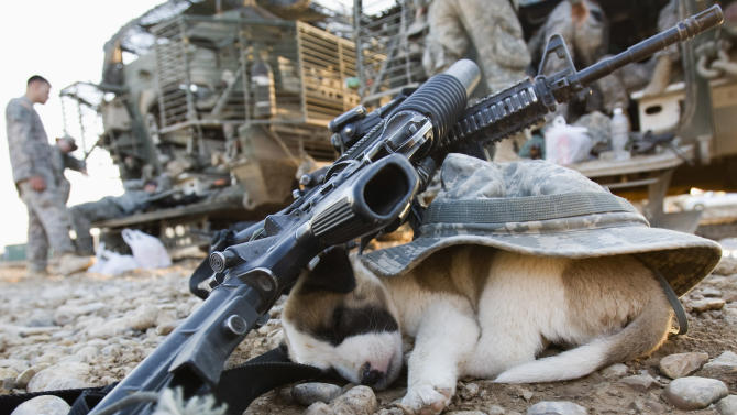A puppy sleeps under a U.S soldier's hat and rifles in Baquba