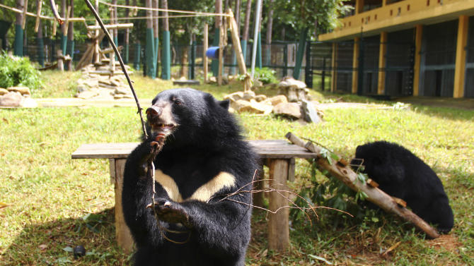 Vietnam may evict bears from 'protected' park land