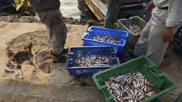 Gaza's Fisherman Are Big Winners in the Ceasefire Deal
