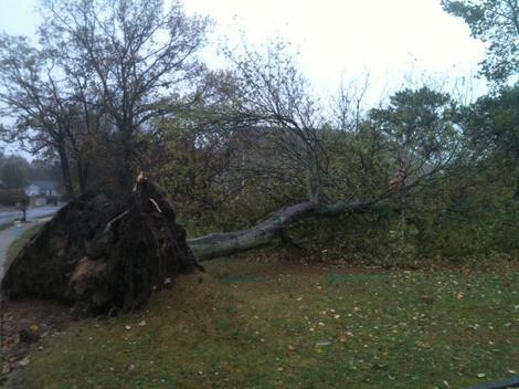 In New Jersey, Trees Falling and Wind Howling from Sandy